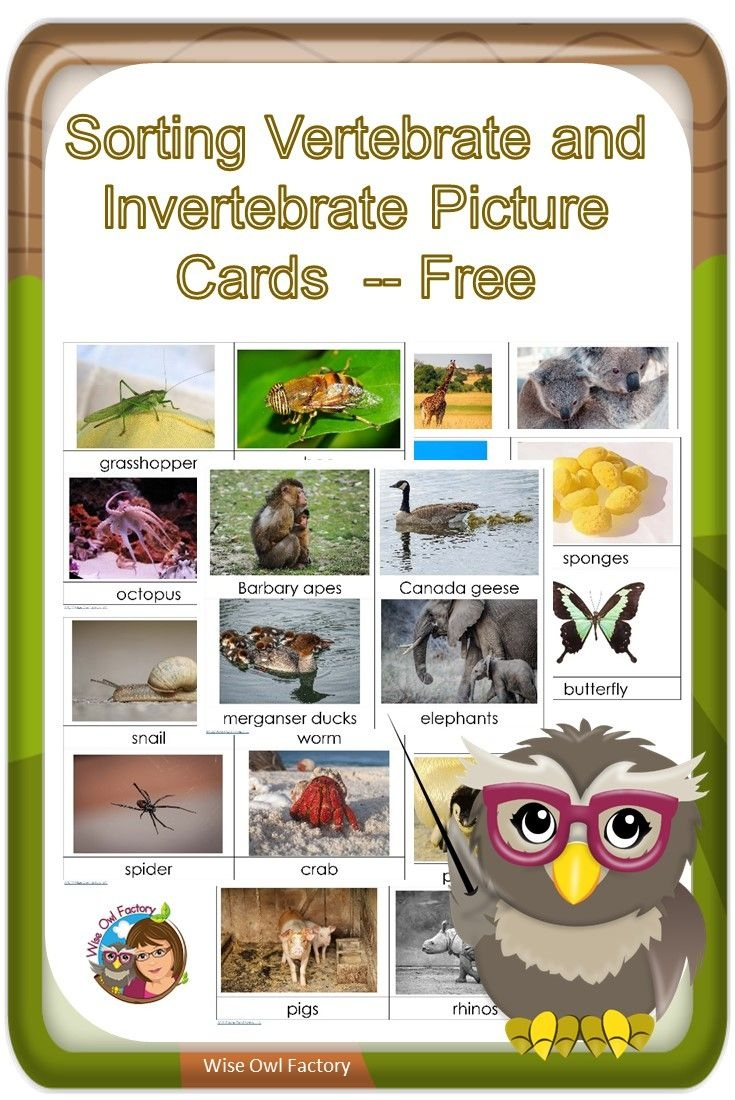 Invertebrates And Vertebrates Card Sort Free Pdf | Science - Free Printable Animal Classification Cards