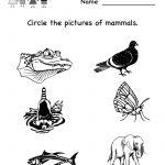 Kindergarten Life Science Worksheet Printable | Worksheets (Legacy   Free Printable Worksheets For Kids Science