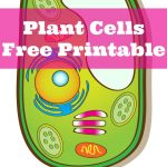 Learning About Plant Cells {Free Printable}   Only Passionate Curiosity   Free Printable Cell Worksheets