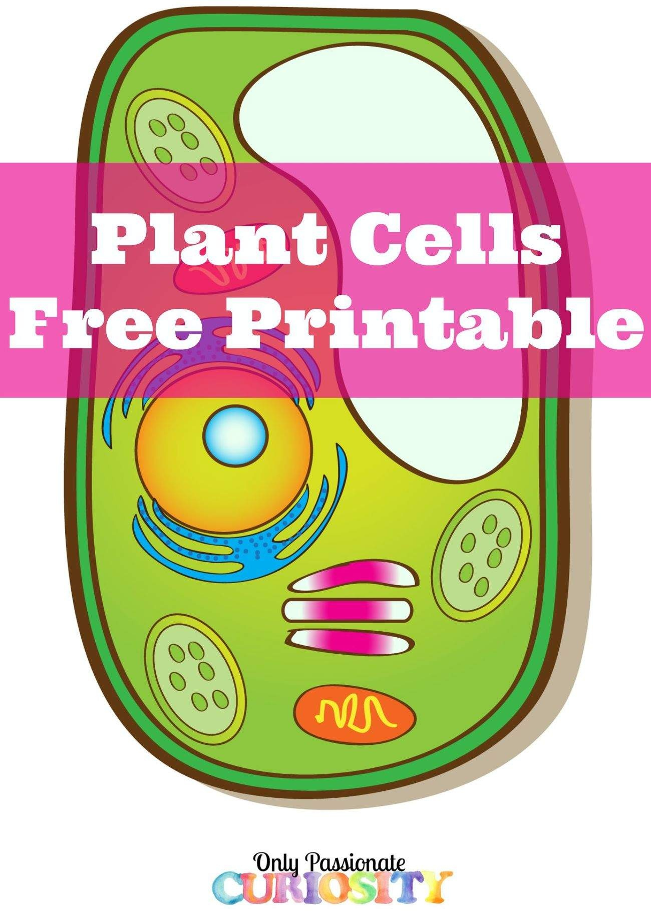 Learning About Plant Cells {Free Printable} - Only Passionate Curiosity - Free Printable Cell Worksheets