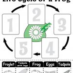 "Life Cycle Of A Frog"" Free Printable Worksheet 