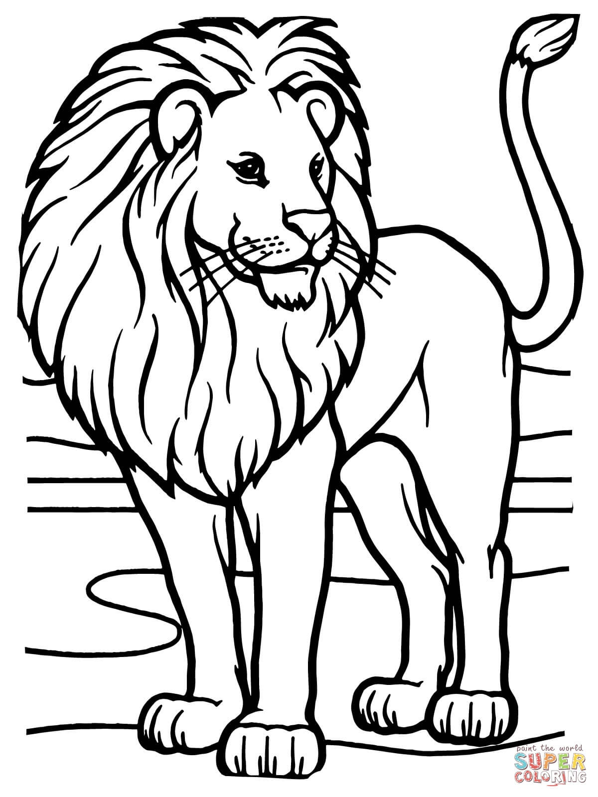Male African Lion Coloring Page   Free Printable Coloring Pages - Free Printable Picture Of A Lion