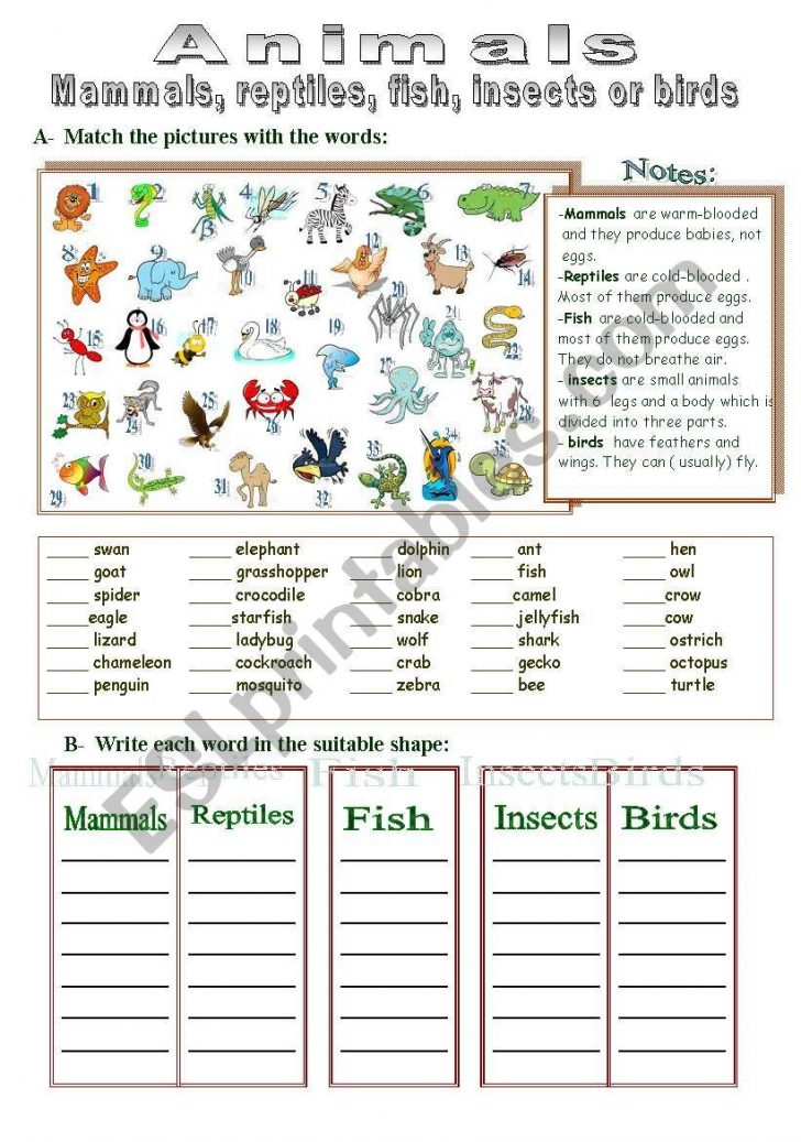 Free Printable Reptile Worksheets