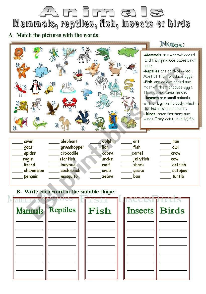 Mammals, Reptiles, Fish, Insects Or Birds - Esl Worksheettotya ( F ) - Free Printable Reptile Worksheets