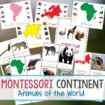 Montessori Animals And Continents Printables And Activities   Free Printable Animal Classification Cards
