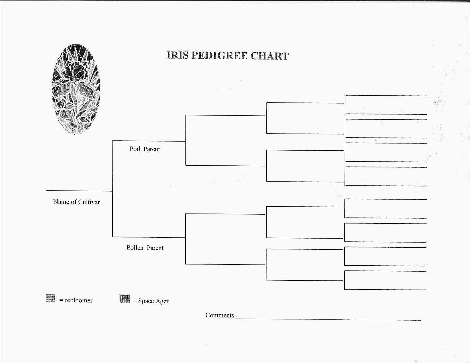 Nice Dog Pedigree Chart Template Images Gallery. 4 Generation Family - Free Printable Dog Pedigree Generator