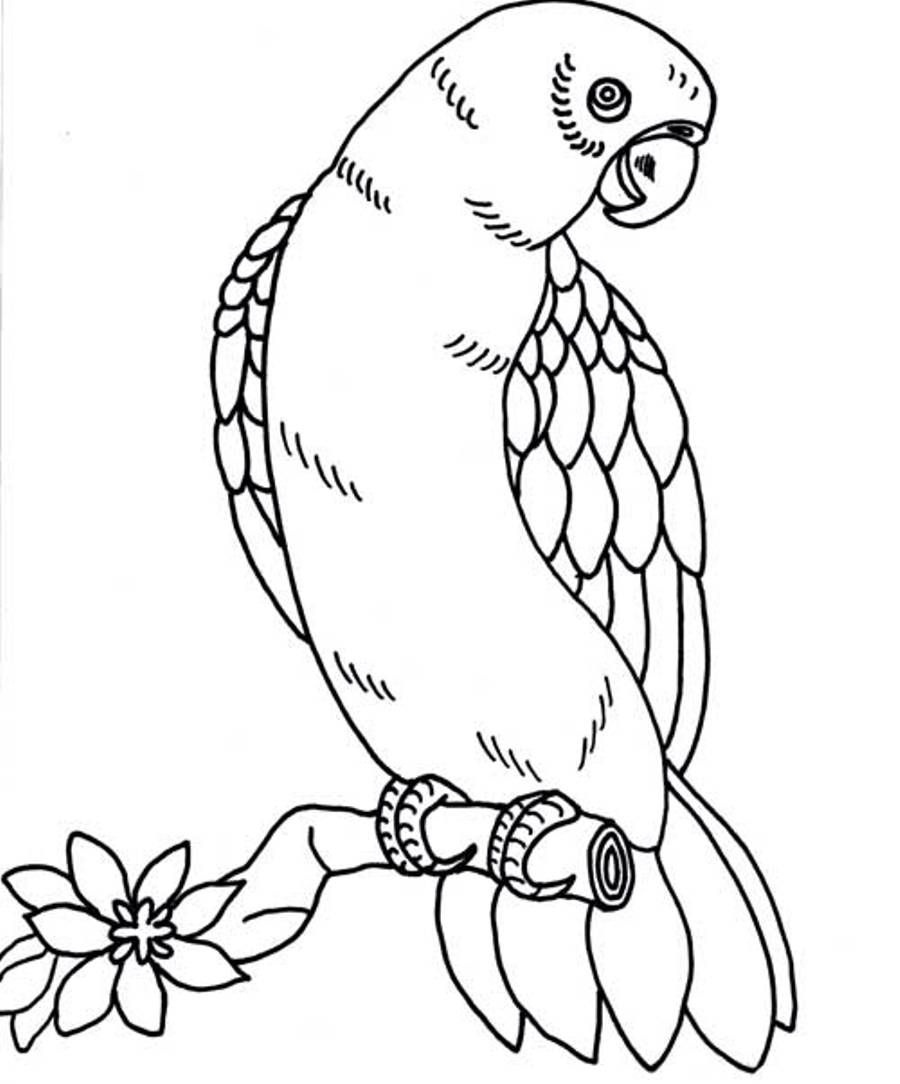 Parrot Outline Coloring Pages Beautiful 78 For Print With Bold - Free Printable Parrot Coloring Pages