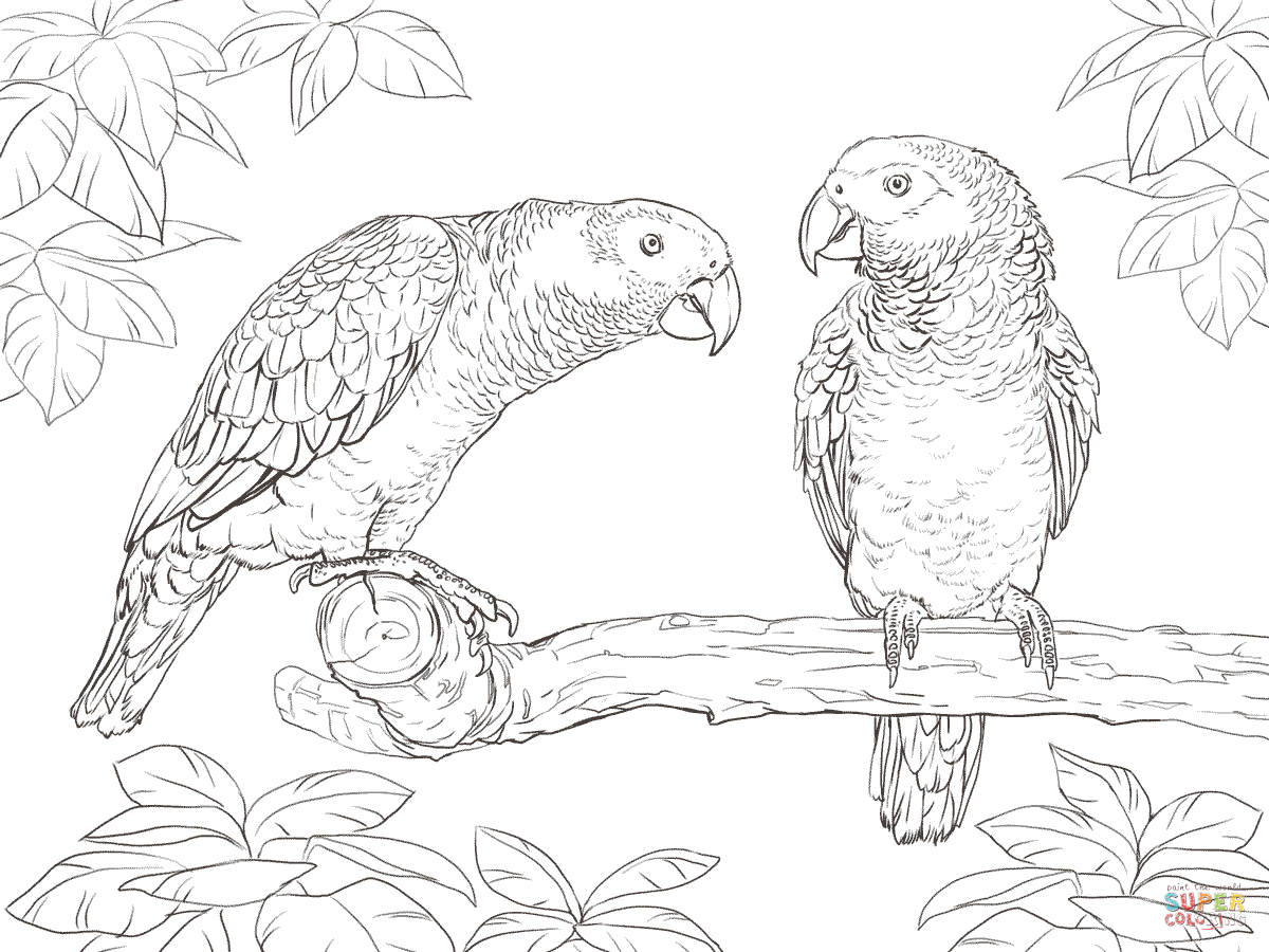 Parrots Coloring Pages | Free Coloring Pages - Free Printable Parrot Coloring Pages