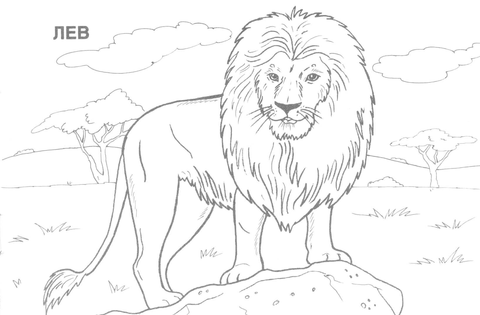 Pinjulia On Colorings   Blanco Y Negro, Dibujos A Lápiz - Free Printable Wild Animal Coloring Pages