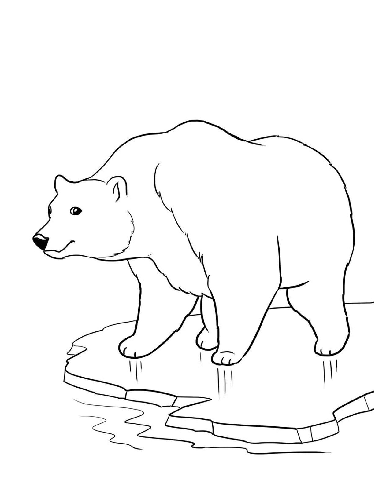 Pinshea Brooking On Polar Bear Moodboard | Bear Coloring Pages - Polar Bear Printable Pictures Free