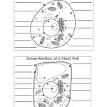 Plant And Animal Cell Diagram Blank | Printable Diagram | Printable   Free Printable Cell Worksheets