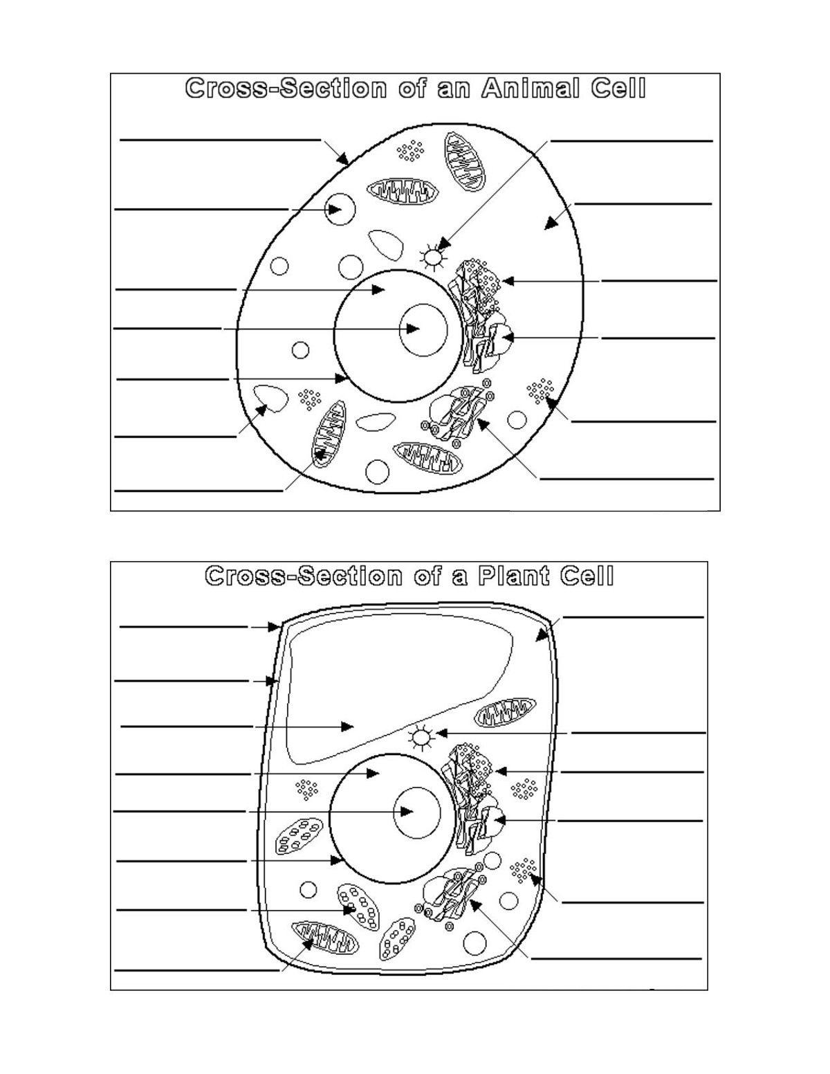 Worksheet : Animal Cell Coloring Worksheet Answers Animal ...