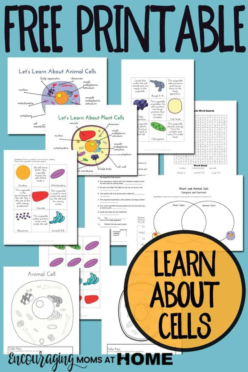 Plant And Animal Cell Printables Grades 4-6 - Free Printable Cell Worksheets