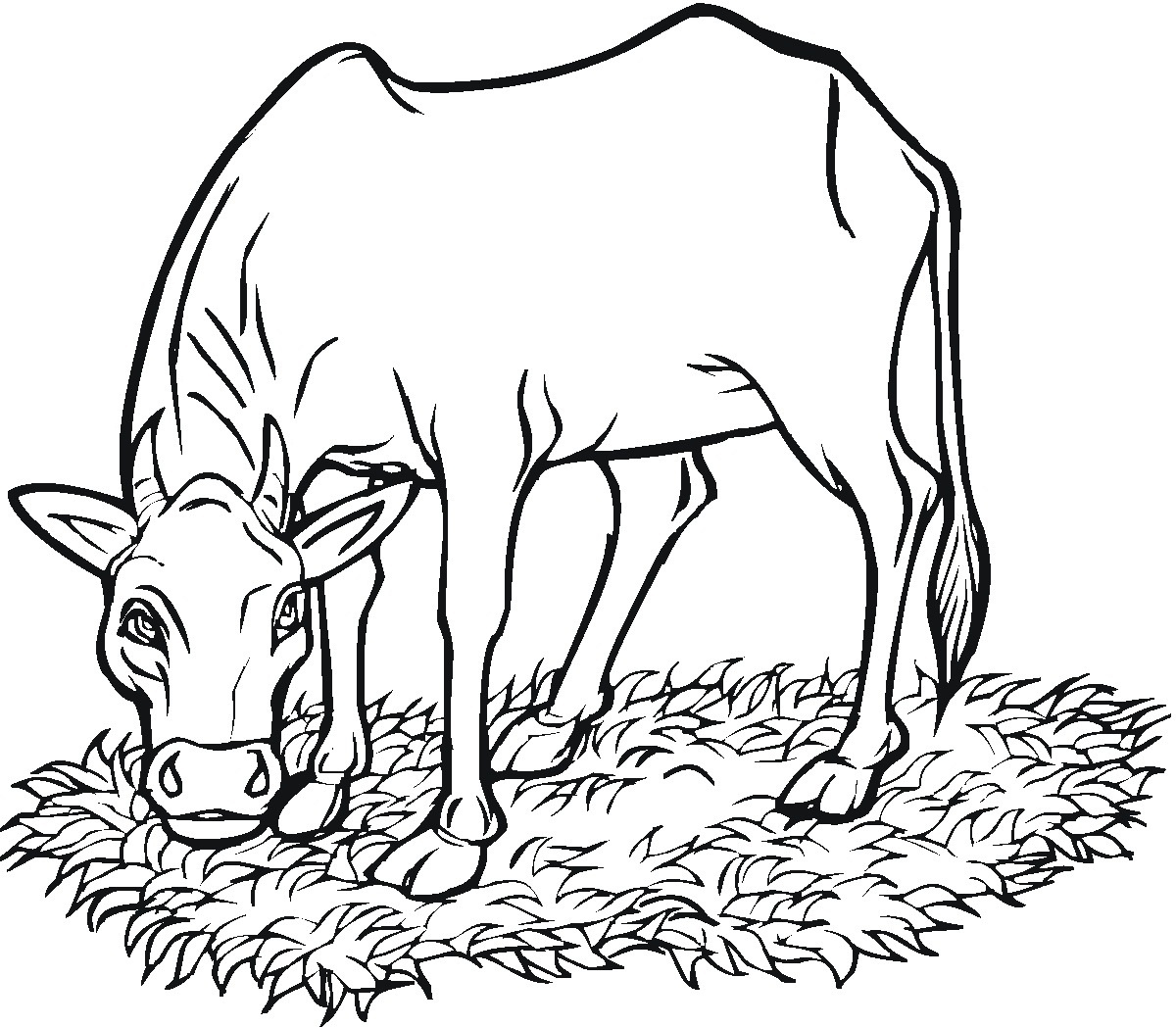 Printable Cow Coloring Pages | Coloringme - Coloring Pages Of Cows Free Printable