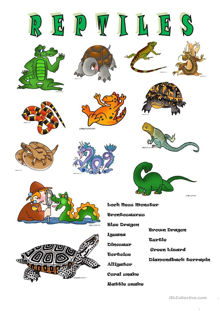 Reptiles Worksheet - Free Esl Printable Worksheets Madeteachers - Free Printable Reptile Worksheets