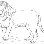 Standing Lion Coloring Page   Free Printable Coloring Pages   Free Printable Picture Of A Lion