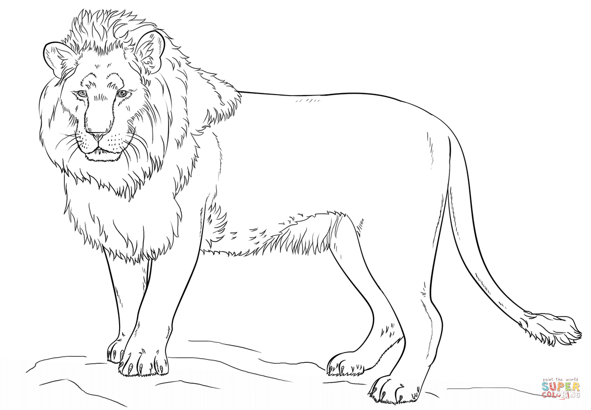 Standing Lion Coloring Page   Free Printable Coloring Pages - Free Printable Picture Of A Lion
