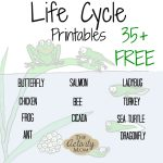 The Activity Mom   Life Cycles Printable   The Activity Mom   Life Cycle Of A Frog Free Printable Book