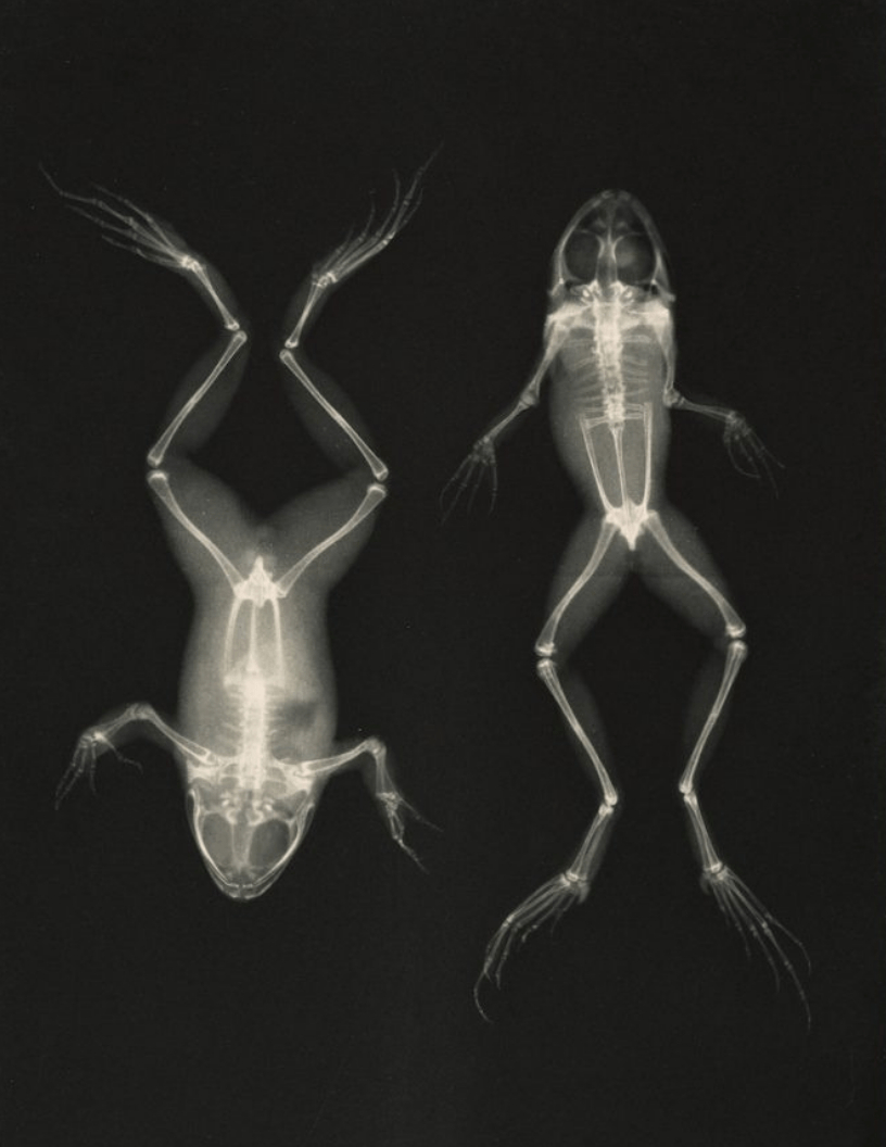 Vintage X Ray Printable Images In 2019   ♥ Group Boards - Advertise - Free Printable Animal X Rays